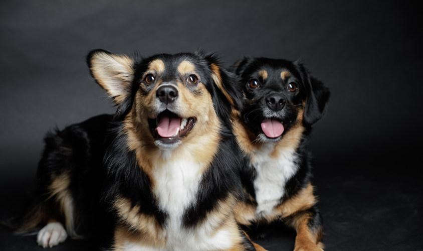 Unsere Hunde MainBARF