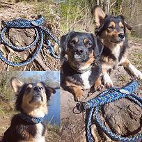 Hundehalsband blautöne
