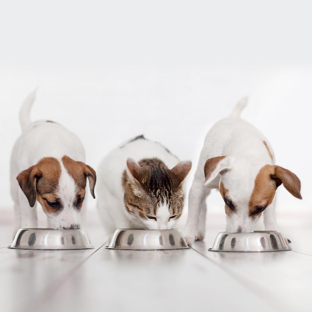 Hund und Katze fressen. BARF Frankfurt