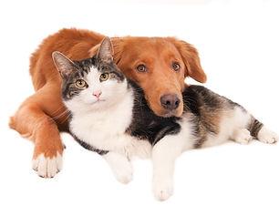 BARF Futterplan für ausgewachsene Hunde und Katzen