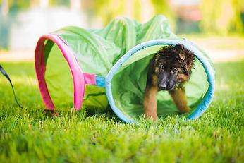 Hundefitnesstraining | Hundetraining | Welpenstunde