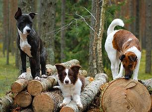 Hundefitness | Fitnesstraining für Hund