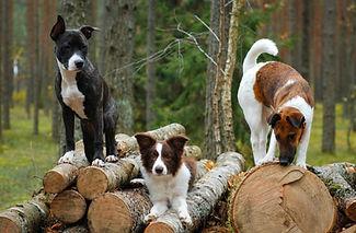 Fitnesstraining für erwachsene Hunde