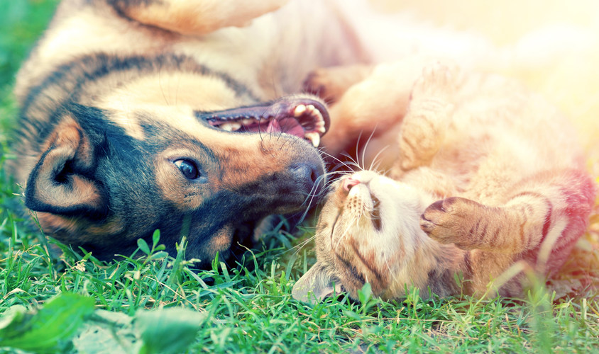Dog and cat best friends playing togethe