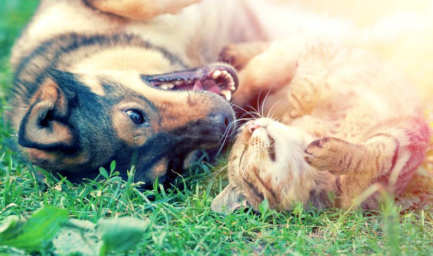 Hund und Katze Freundschaft
