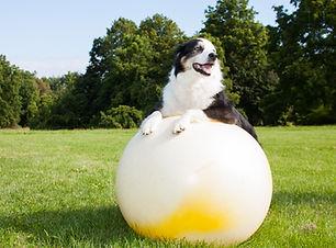 Hundefitnesstraining | Fitnesstraining für Hunde