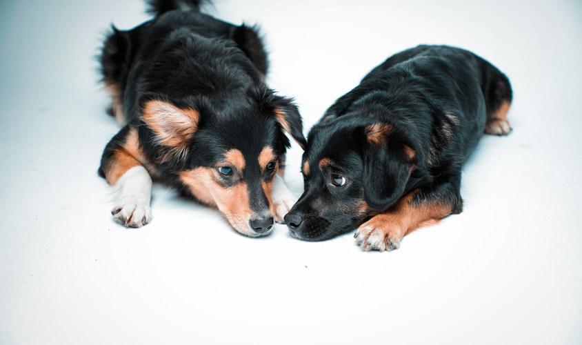 MainBARF Hunde Romeo und Kari
