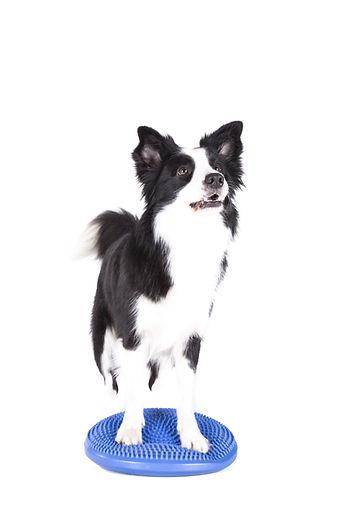 Hundefitnesstraining | Fitnesstraining Frankfurt | Gesundheitstraining Hund