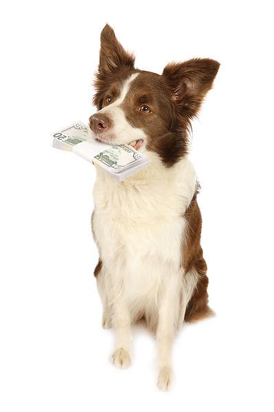 Zahlungsarten_Hund_Geld