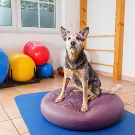 Hundefitnesstraining | Hundetraining Frankfurt | Oldie