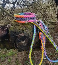 Paracord Halsband und Leine regenbogen Hund