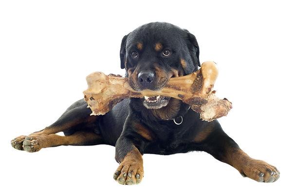 Hund mit Knochen BARF Ernährung