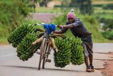 farmer on bike.jpg