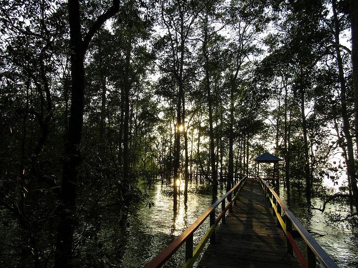 Mangrove-Trekking_IMG_1912-2-web.jpg