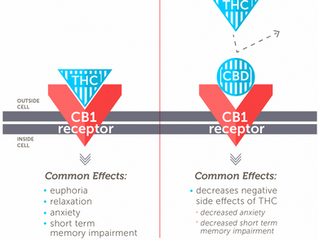 CBD (Cannabidiol): What Does It Do & How Does It Affect the Brain & Body?