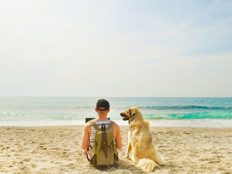 Vacationing with Pets: To Bring or Not to Bring - That is the Question