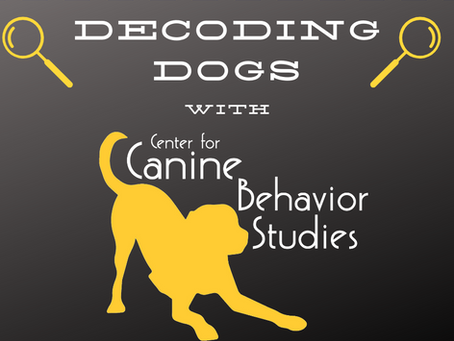 Decoding Dogs: Trancing