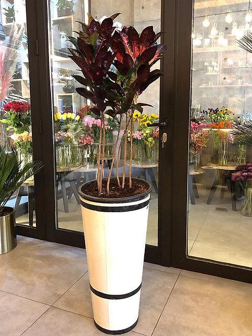 croton plant with vase