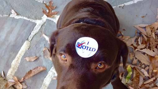 Sometimes a Voter's Choice is Just SO Clear!