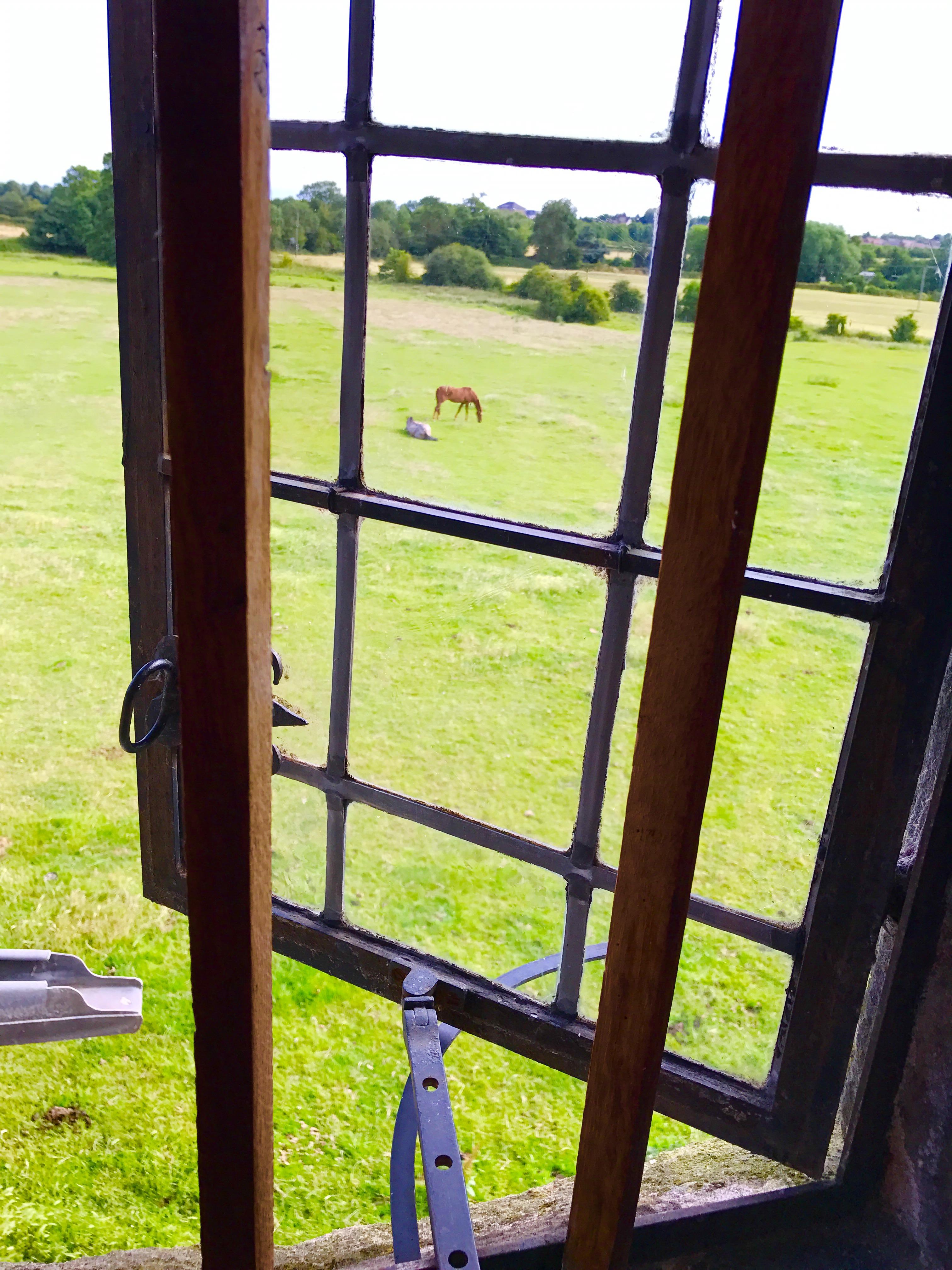 horses_loo
