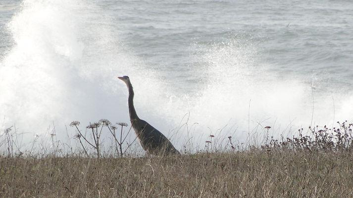 Bird Watching in Bodega Bay