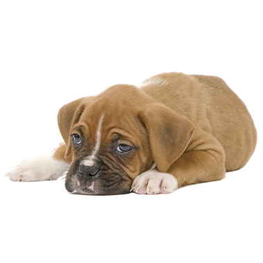 chiot-png-3.png