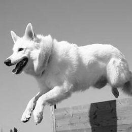conseils entrainements chien.jpg