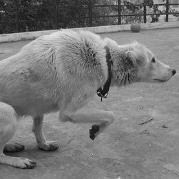 chien craintif.jpg