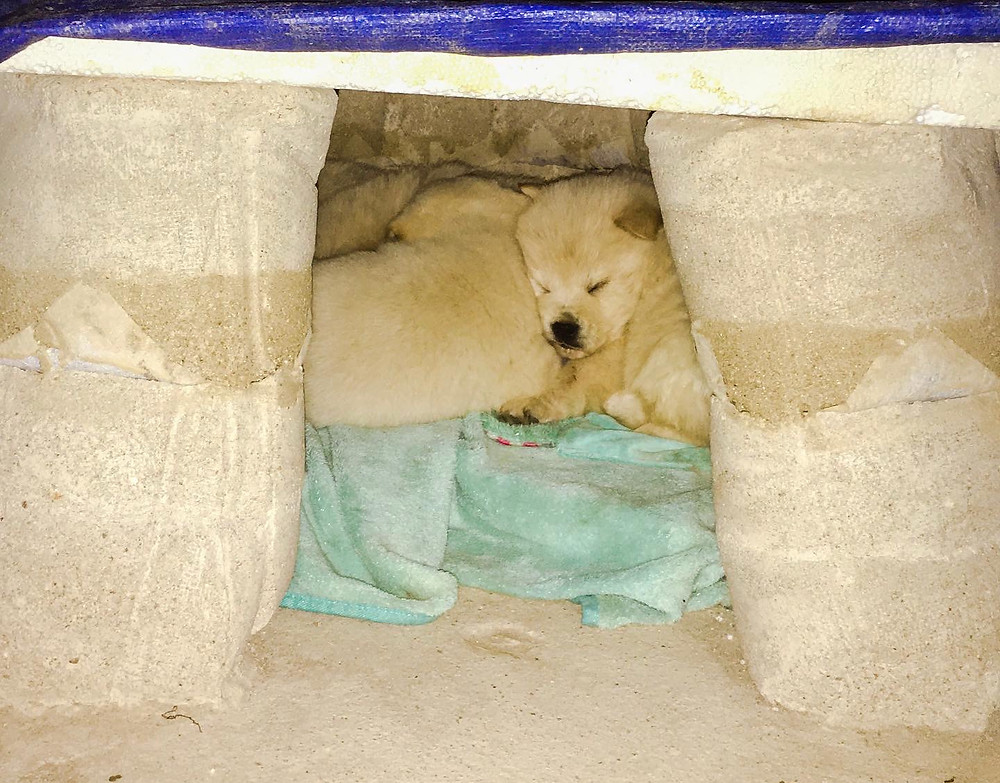 Dog in the fabric formed rammed earth doghouse, fabric formwork