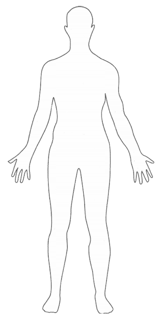 Human body outline.png
