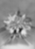 Screen Shot 2019-05-10 at 10.54.39 AM.pn