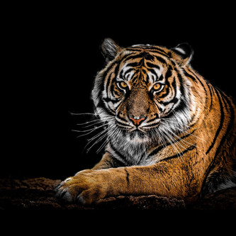 International Tiger day- need to prevent the declining number of Tigers in India