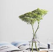 Planta no frasco de vidro