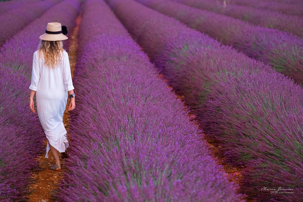 Provence 2017