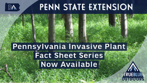 New & Easy-To-Use Invasive Plant Fact Sheets Now Available