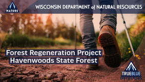 Forest Regeneration Project Scheduled For Wisconsin's Havenwoods State Forest