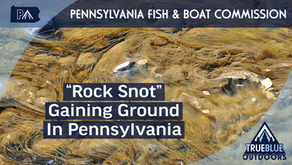 """Invasive Species Known As """"Rock Snot"""" Making Moves"""