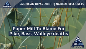 Michigan fish fallout blamed on 'black liquor' from paper mill