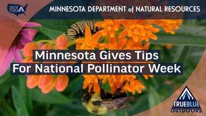 Pollinator Week Promotes Bees, Butterflies, & Hummingbirds