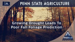 PA's Growing Drought Leading To Poor Fall Foliage Prediction