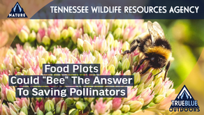 Food Plots Could Be The Answer To Help Save Bees, Butterflies