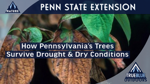 Pennsylvania's Trees Find A Way In 2020's Dryest Conditions