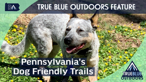 Our Favorite Dog Friendly Parks & Trails in Pennsylvania