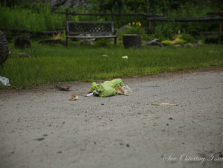 GARBAGE, REALLY?  We live in such a beautiful place. Why, why would someone leave their garbage in m