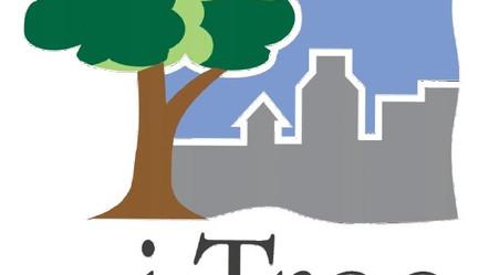 i-Tree: Welchen Wert haben städtische Bäume