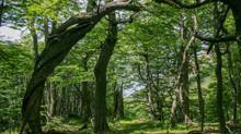 La historia de un árbol
