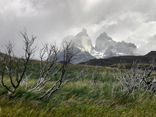 Thoughts from the forest fire in Torres del Paine National Park