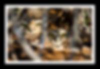 Alfredo rivera fotografía, alfredo rivera, image gallery, image galleries, pequén, fauna, wildlife