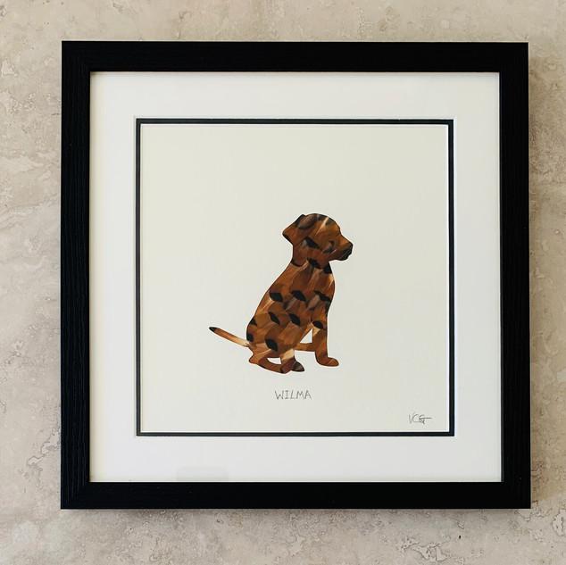 Wilma the labrador puppy