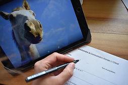 questionnaire com animale